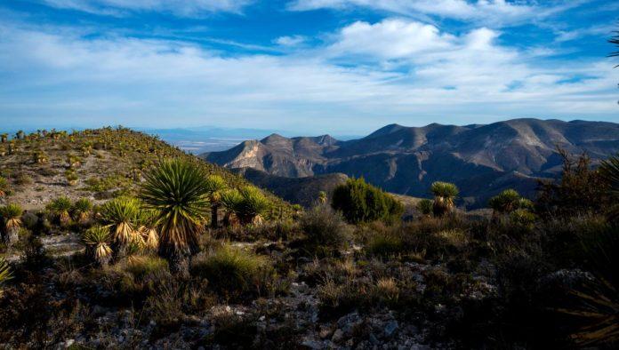 Desierto de San Luis Potosí