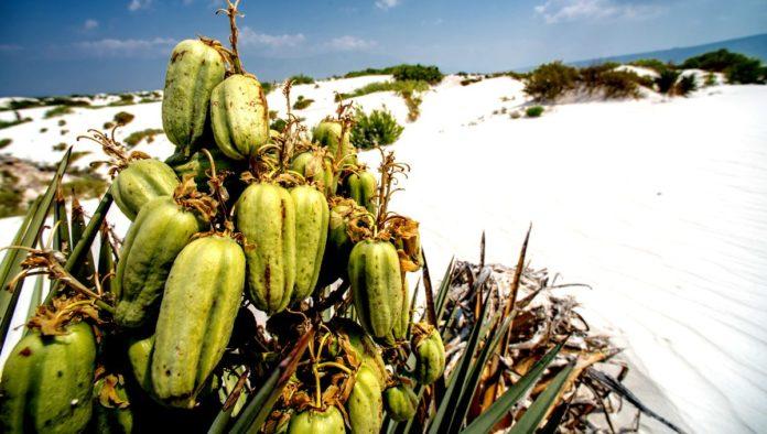 desiertos imperdibles en México