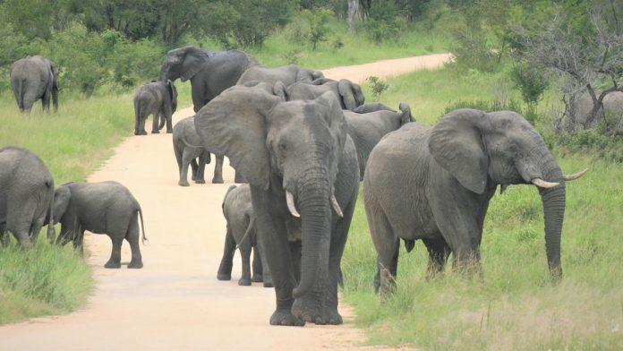 VIDEO: Una manada de elefantes causa conmoción en China