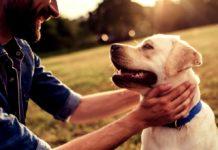 prolongar la vida de los perros