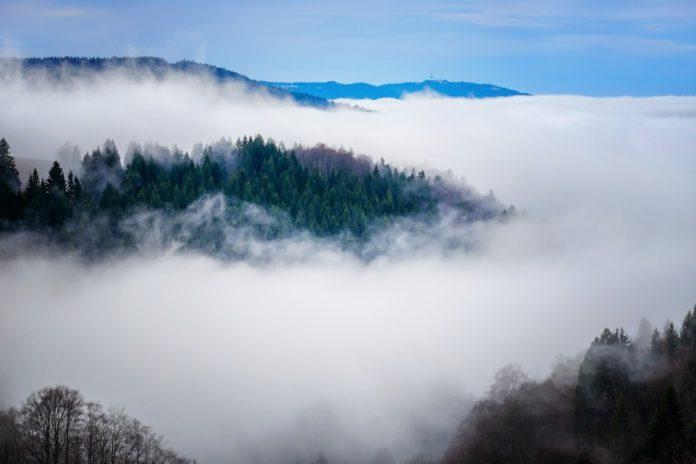Reserva de la Biosfera El Triunfo: el paraíso nuboso de Chiapas