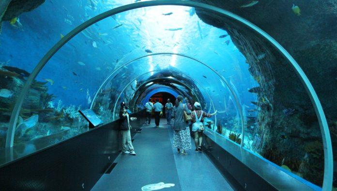 acuario más grande de Latinoamérica