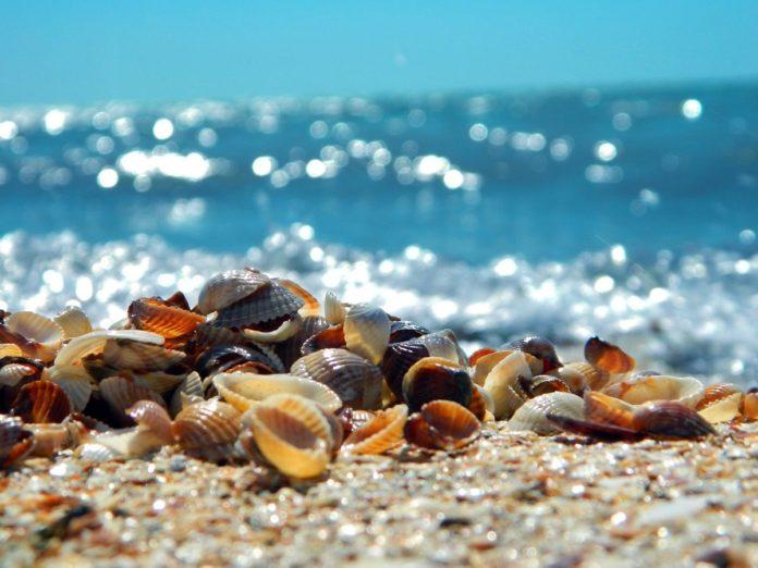 Bahamitas, la playa que se llena de conchas de mar