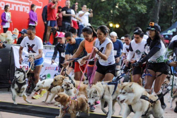 Dog Running Race, la carrera de lomitos con causa en la CDMX