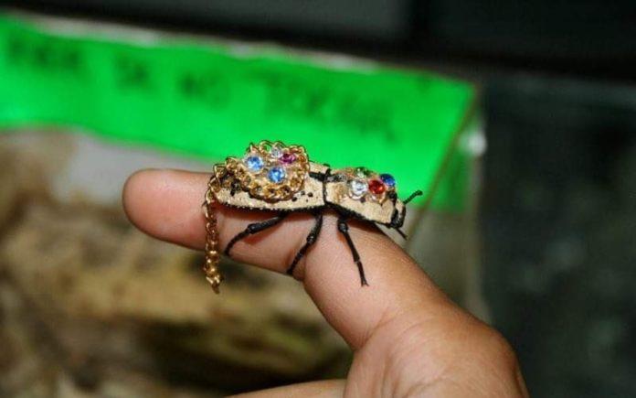 El Cardenal y El Escarabajo Maquech: leyendas yucatecas que siguen vigentes