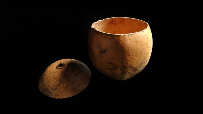 La jícara arbol sagrado maya