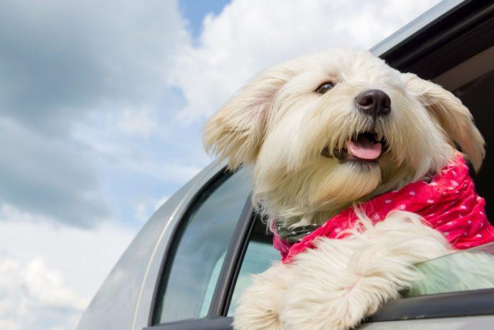 Consejos para viajar con tu mascota por carretera sin morir en el intento