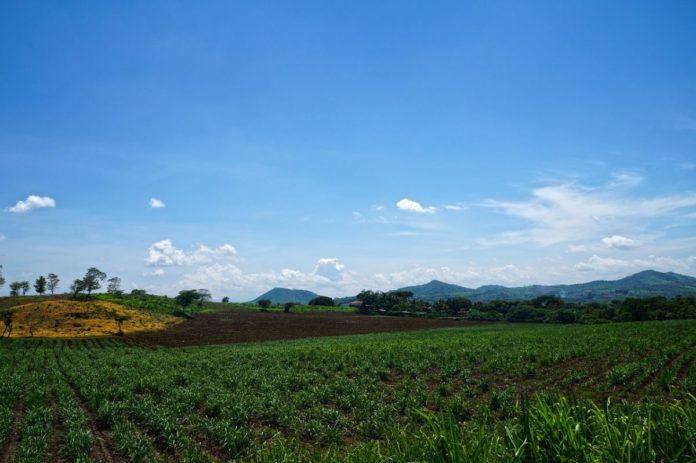 Matacapan, un rincón escondido entre sembradíos de tabaco en Veracruz