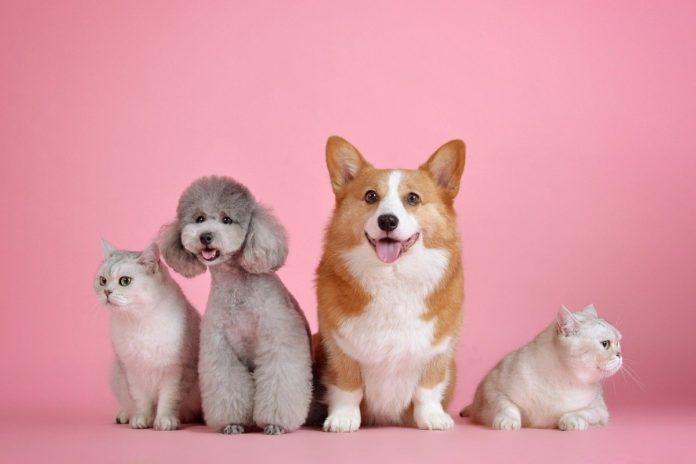 Lo que debes saber sobre los seguros para mascotas