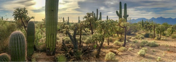Zapotitlán Salinas, un paraíso lleno de cactus