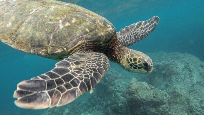 akumal tierra de tortugas