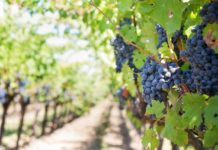 Entreerres: Un viñedo poblano con mucho encanto