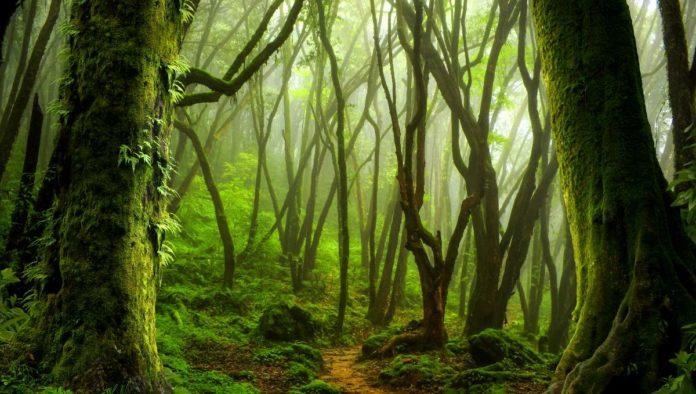 Santuario del Bosque de Niebla