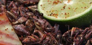 Comidas exóticas de México que debes probar al menos una vez en la vida
