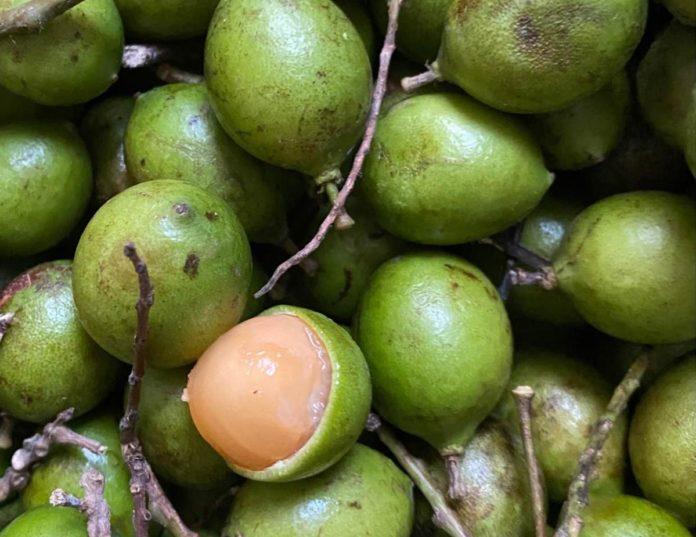 Guaya, el dulce tropical del sureste mexicano
