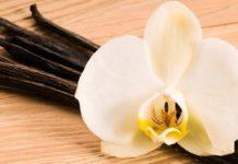 La leyenda de la vainilla: Un amor imposible que dio origen a la flor