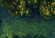 bosque de manglares